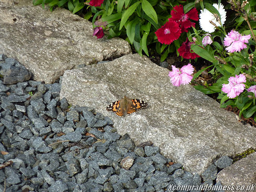 Still warm enough for butterflies.