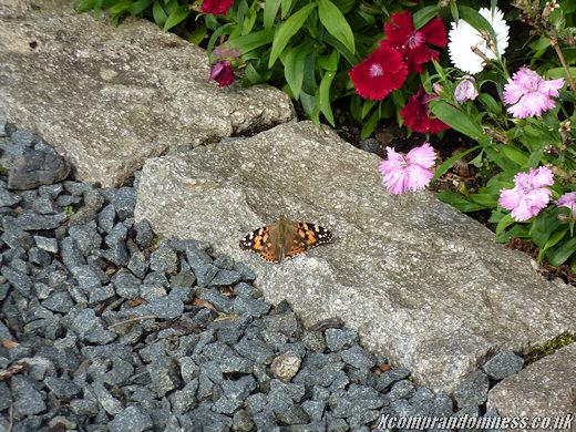 Still warm enough for butterflies.