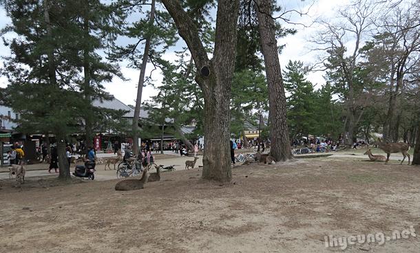 Can't miss Nara Park
