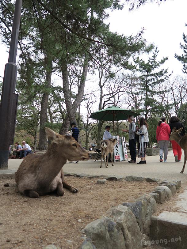 Deer resting next to senbei stall.