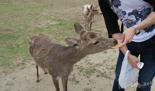 Feeding the deers.
