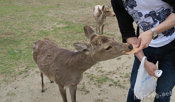 Feeding the deers.