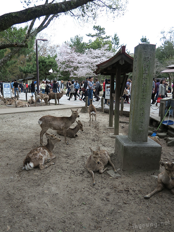 Deers everywhere.